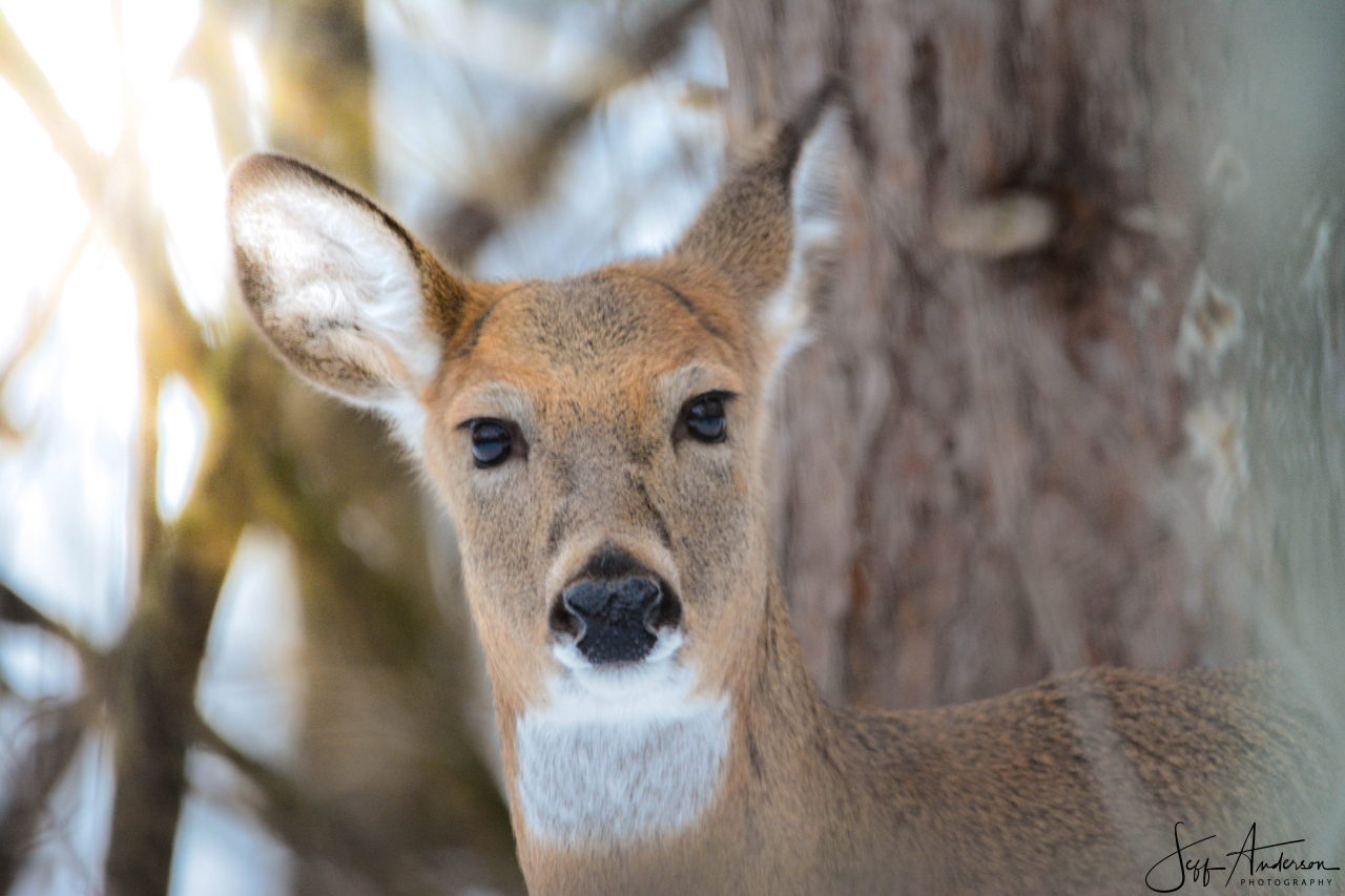 4 juveniles accused of poaching deer in Indiana, Illinois