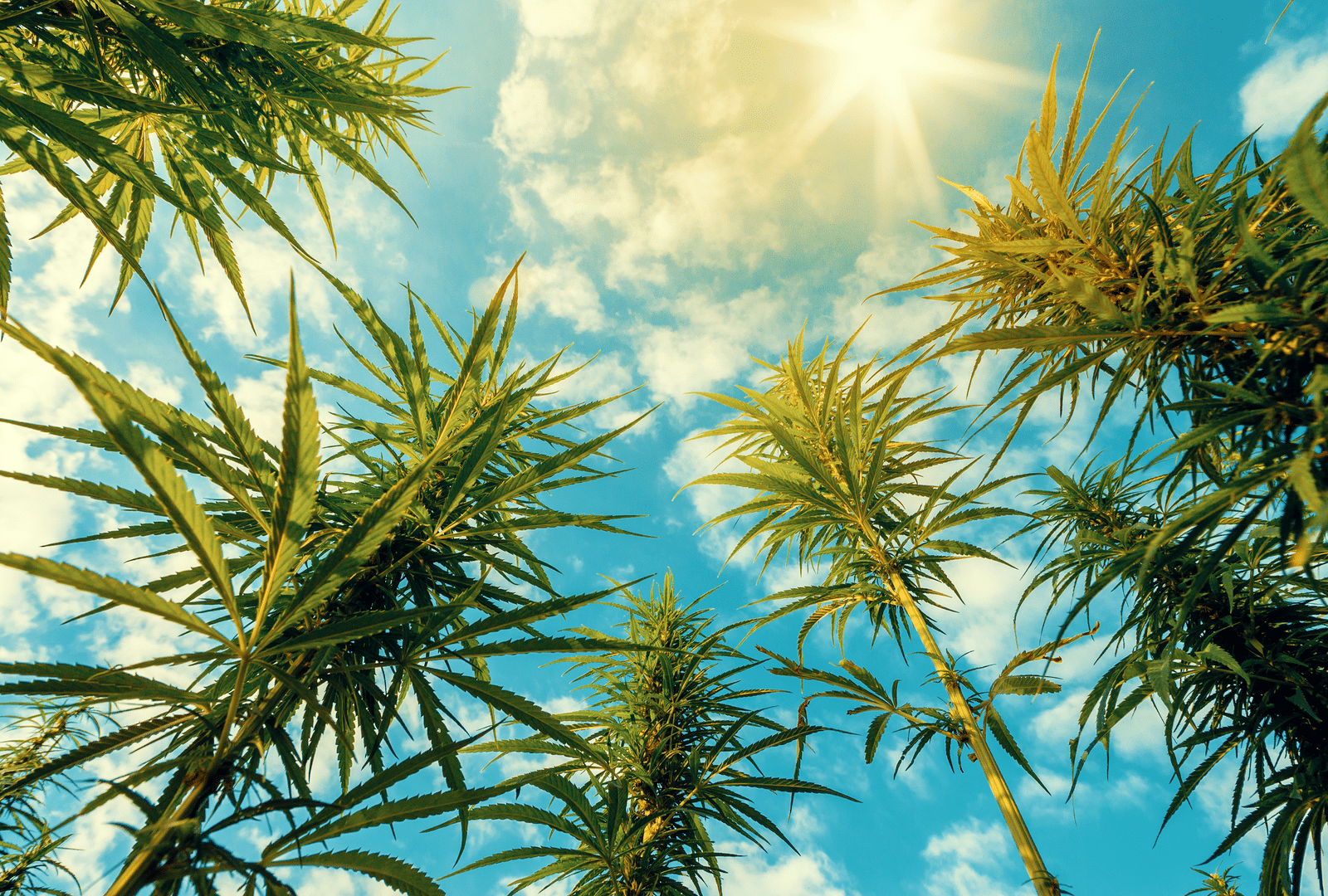Cannabis real estate in Illinois gets push from REIT IIP, 4Front Ventures
